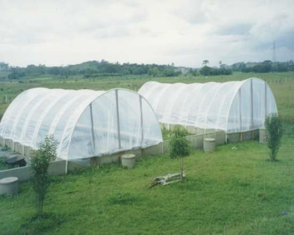 flores jardim guedala:Embalagem Transparente Agricola Paineiras Do Morumbi