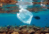 Embalagem Biodegradavel Veleiros