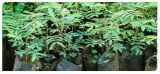 Embalagem Para Plantas Estância Jaraguá