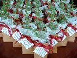 Embalagem Para Plantas Jardim Mitsutani