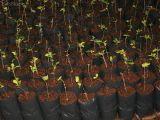 Embalagem Para Plantas Jardim São Joaquim