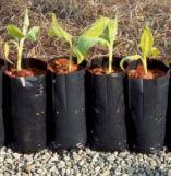 Embalagem Para Plantas Vila Reis