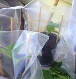 Saco De Plastico Para Planta Catumbi